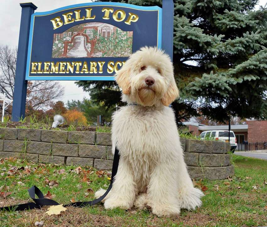 Meet some local canines who are not only good dogs, but have jobs, too.
