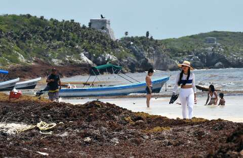 Summer seaweed invasion taking a toll on Mexico - Laredo