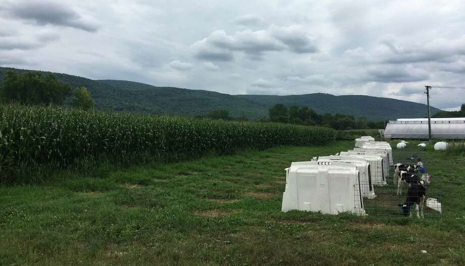 The 500-acre Freund Farm in East Canaan. Photo: Maya Moore / CTMirror.org