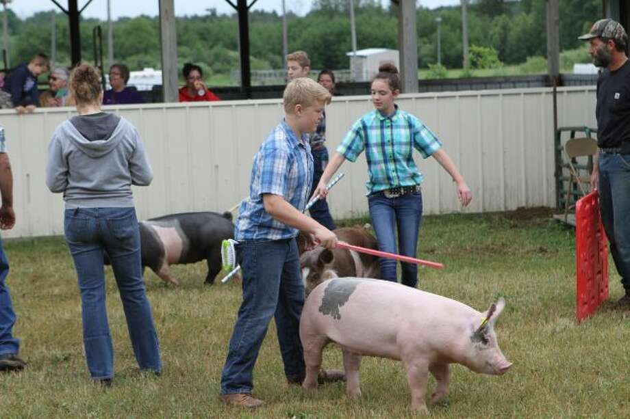Open class youths lead their pigs around the arena in front of the judge on Tuesday, marking the third day of this year's Marion Fair. The fair will continue through Saturday. (Herald Review photos/Meghan Gunther-Haas)
