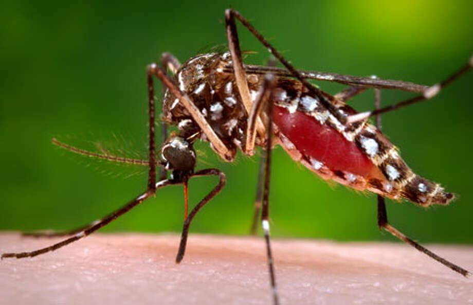 Health officials throughout the state are encouraging residents to be vigilant about avoiding mosquito bites this year as there have been reports of mosquitoes carrying West Nile virus in seven counties in southern and eastern Michigan. (Courtesy photo)