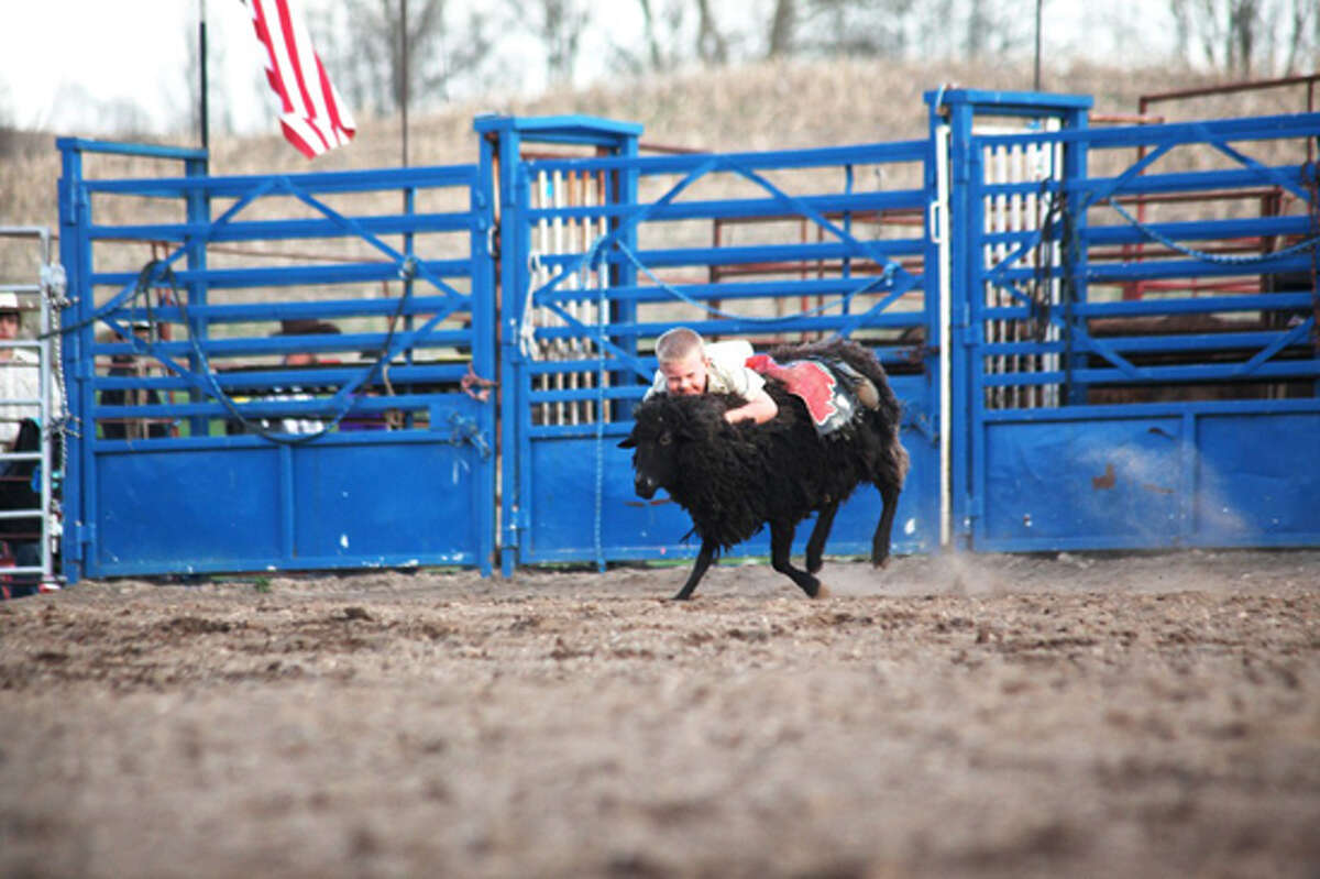 """HANG ON: Kyle Scott, 5, of White Cloud, hangs on tight to a sheep during Saturday's """"mutton busting"""" competition. Similar to bull riding, children must stay on their sheep for eight seconds for a chance to win a belt buckle."""