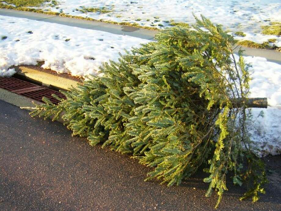 Residents of Big Rapids, Reed City and Evart can leave their Christmas trees by the street for pickup. People also can turn their trees into bird feeders or habitat enhancements. (Courtesy photo)