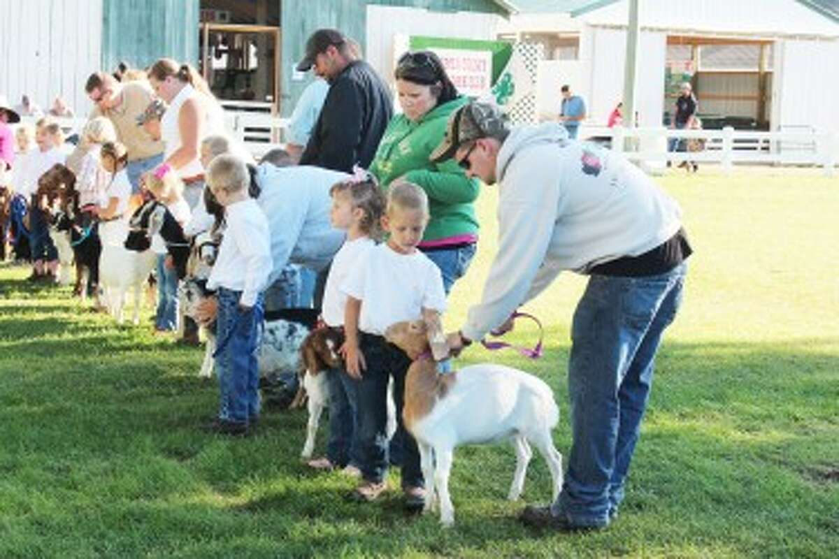 Goats: Young 4-H members showcase their goats on Tuesday during the fair. More showcases and auctions are scheduled through Saturday. (herald Review photo/Karin Armbruster)