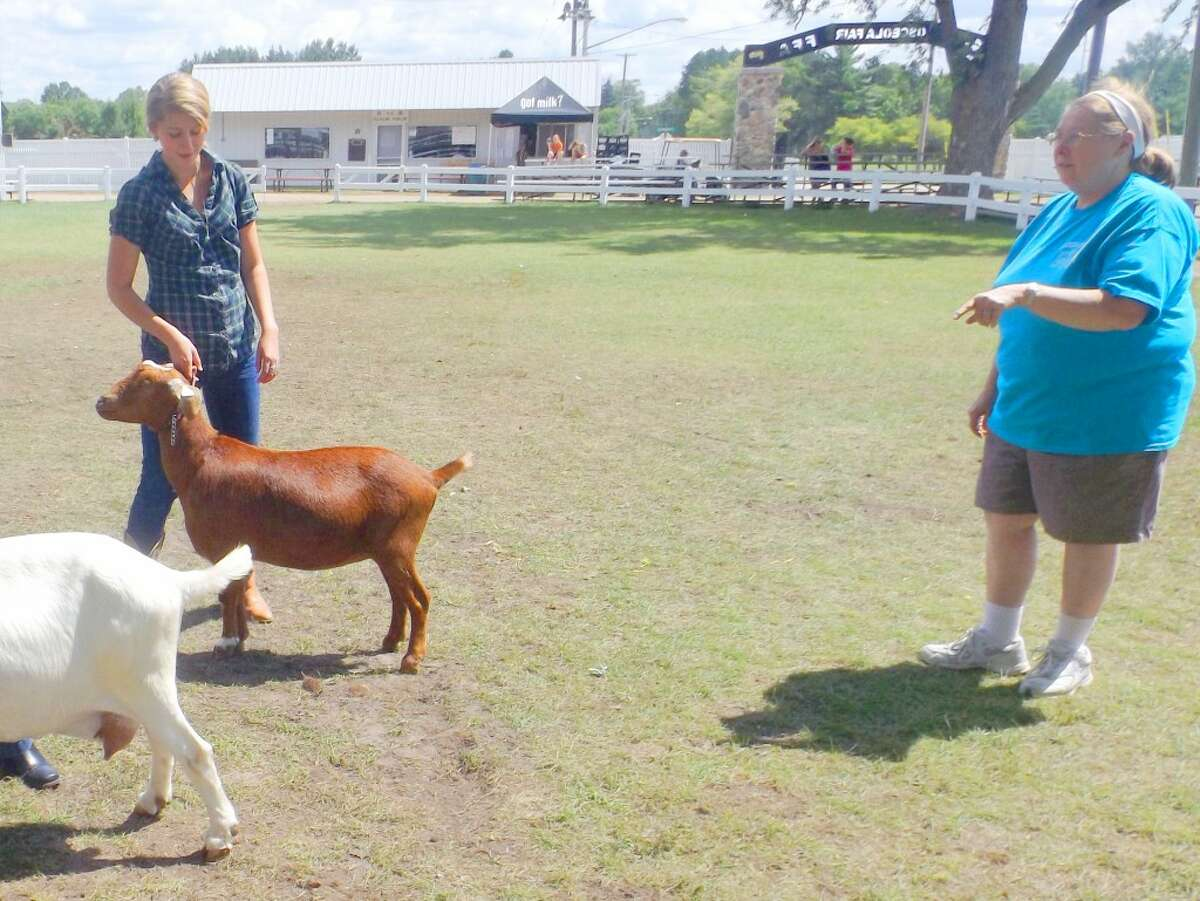 Its not easy: Even little goats can put up a big fight, and 4-H'ers have to practice and be patient when it comes time to show the feisty creatures. (Jim Crees photo/Herald Review)