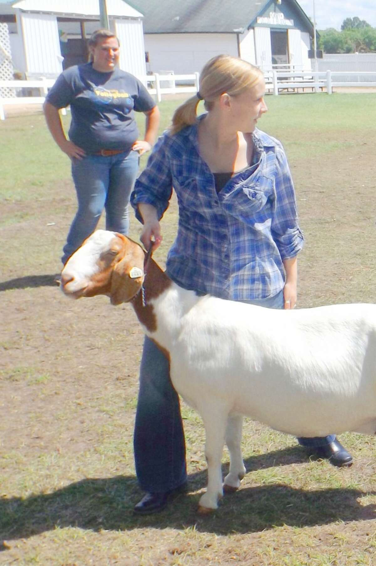 Pay attention: Showing goats takes plenty of practice and a great deal of patients. (Jim Crees photo/Herald Review)