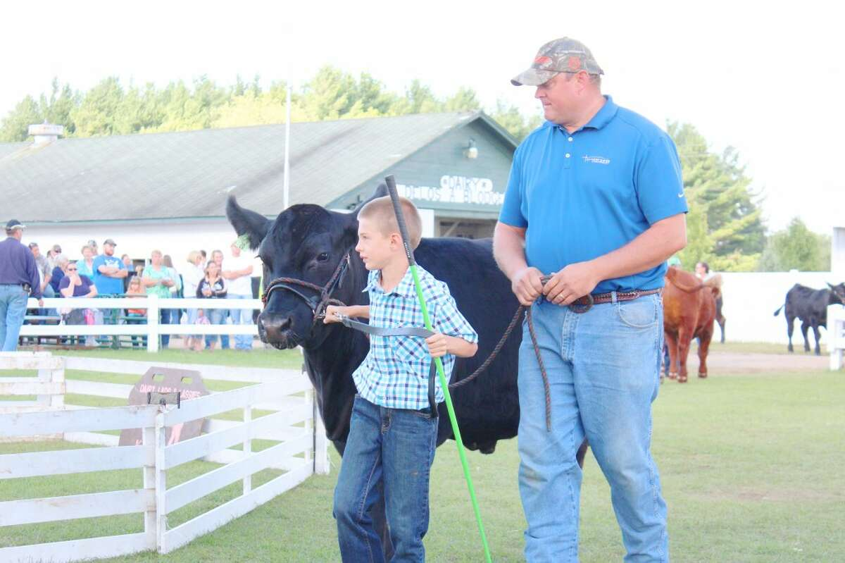 show time: A 4-H member shows off his market steer during Friday's large animal auction, which is an extremely popular event. (Herald Review photo/Karin Armbruster)