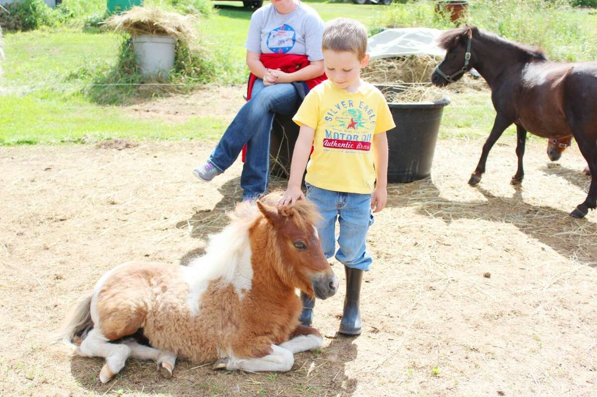 Preston Cushman, 5, pets Ladybug while spending time at the farm. He said he likes to see the miniature horses and made sure the younger ones had plenty to eat during his visit.