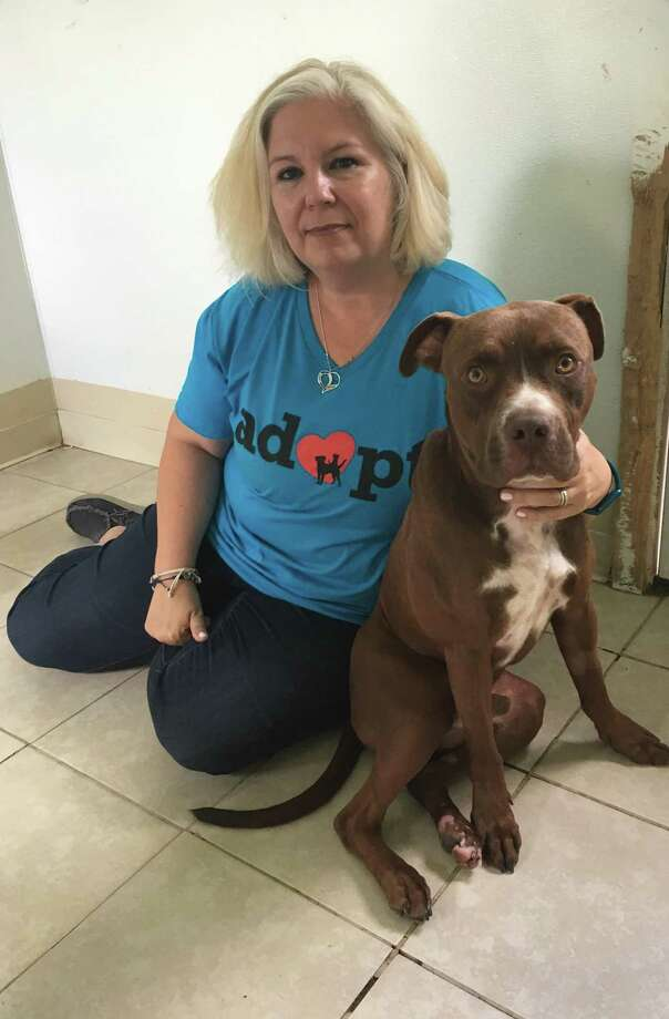 Erin McCollum, Special Pals director of operations, shares time with Abel. Shelter officials found Abel, who was injured, tied to their outside gate. After surgery, Abel is on the mend and is looking for a forever home. Photo: Karen Zurawski / Karen Zurawski