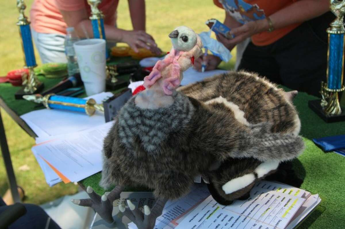 CHALLENGE: Last year, 4-H'ers performed to the best of their ability with a bird which was neither alive nor completely anatomically correct. In the case of turkey, the plush animal also was not the same size as a live specimen. (Herald Review file photo)