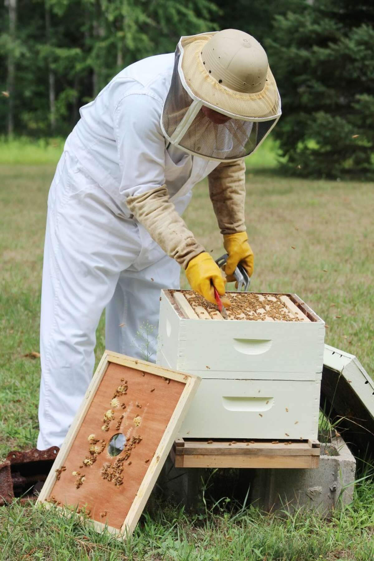 TENDING BEES: Each section of a bee hive can produce 3 pounds of honey per year.