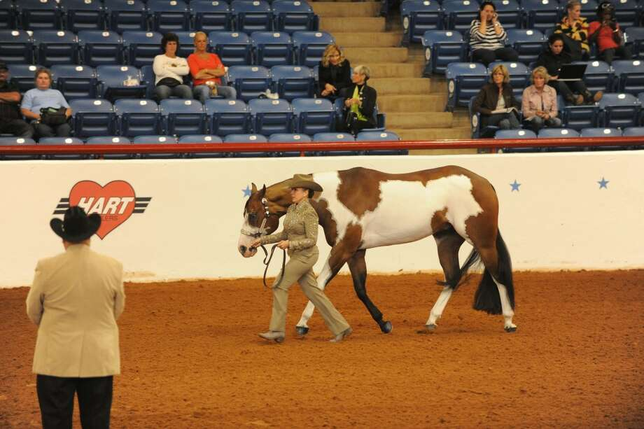 WORLD CHAMPION: Coleen Bull, of Reed City, recently won the world championship paint horse title at the American Paint Horse Association competition in Fort Worth, Texas. Bull competed in the Masters Amateur Showmanship, which is for those age 45 and over. (Courtesy photo)
