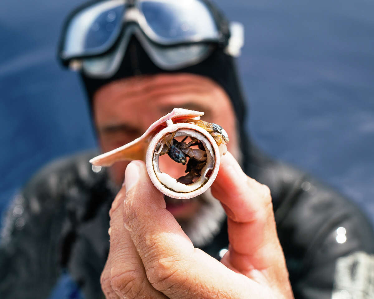 Ben Lecomte holds a piece of plastic in the Pacific Ocean that had become a home for a small crab.