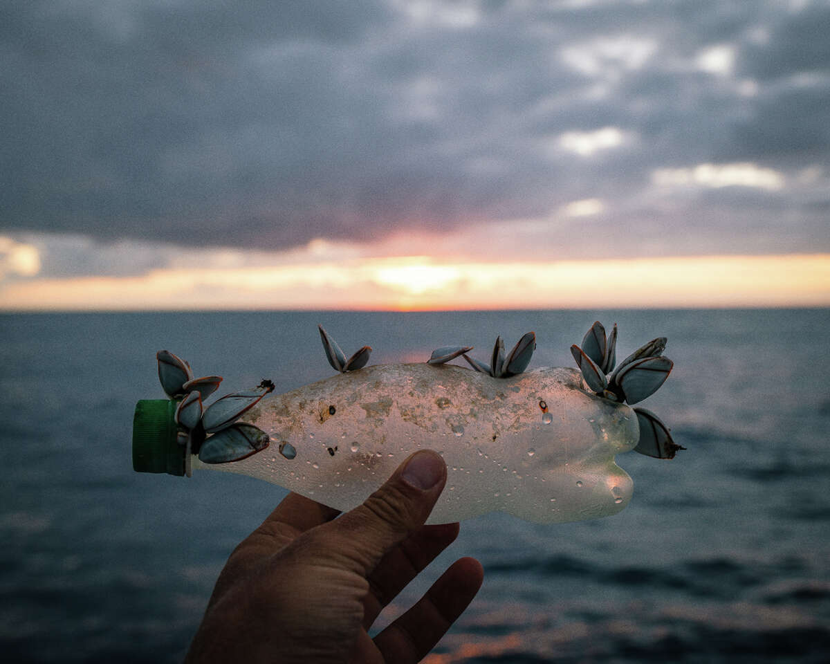 Barnacles attached to a plastic bottle found in the Pacific Ocean during an expedition from Honolulu to San Francisco to raise awareness of the plastic pollution in the Pacific.