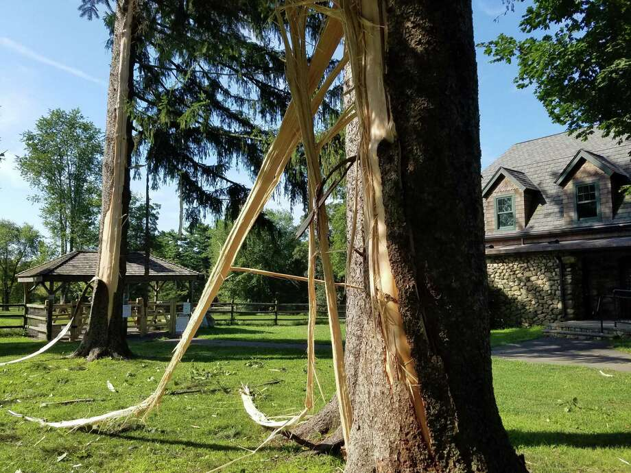 Two trees appear to have been struck by lightning in Waveny Park, near the paddle tennis courts, during a storm on Monday, Aug. 19. The trees will probably die, said the Superintendent of Parks John Howe, the following day. He believes they may stay green for a while, but not for too long, he explained. Photo: Grace Duffield / Hearst Connecticut Media