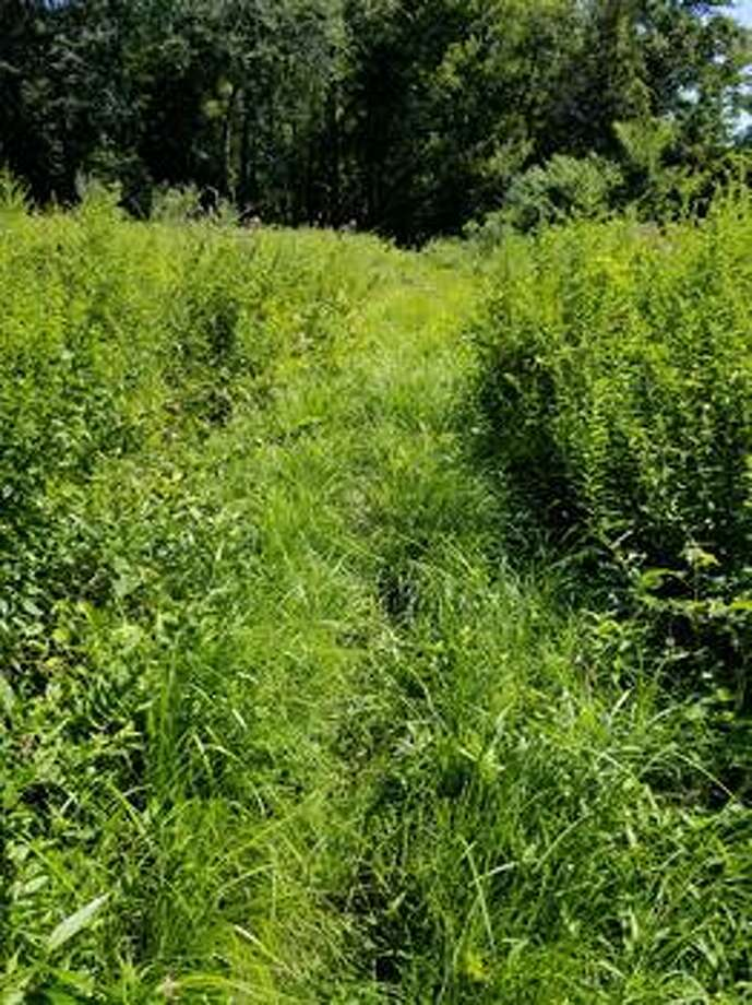 The Shelton Trails Committee will be hosting its next work party Saturday, Aug. 24, beginning at 8:30 a.m. along Paugussett Trail at Constitution Avenue North. Photo: Contributed Photo / Connecticut Post