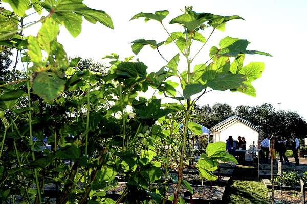 Guests socialize during cocktail hour at the annual Farm To Table Dinner held at The Giving Field in Beaumont Friday. Proceeds from the annual fall event benefit the organic garden, which helps provide fresh produce to those in need. Due to popular demand, two dinner services were offered this year, with the second seating taking place at 4:30 p.m. Saturday. Photo taken Friday, November 2, 2018 Kim Brent/The Enterprise