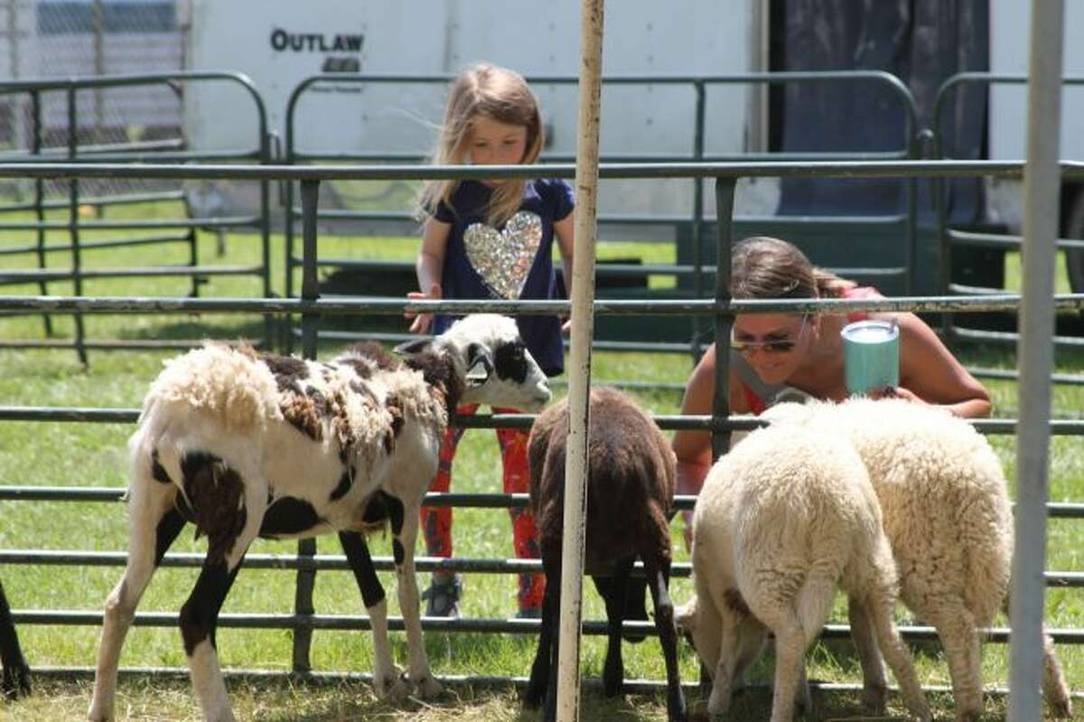 It's that time of the year again - fair season. People are getting ready for fried food, carnival fun and, of course, farm animals. (Ashlyn Korienek/News Advocate)