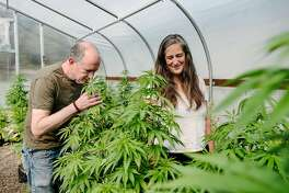 Eric Sklar, a Napa Valley Cannabis Association member and owner of Napa-based cannabis delivery company FumŽ, and Elissa Hambrecht, COO of FumŽ, look over male plants in a greenhouse at their company's cannabis farm in Middletown, Calif, on Thursday, May 30, 2019.