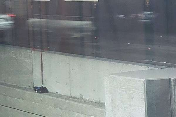 Cat with leash — but no owner — rescued from Bay Bridge ledge