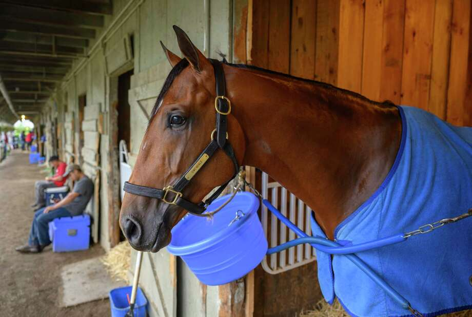 Travers entrant Owendale relaxes in his stall Wednesday August 21, 2019 on the Oklahoma Training Center track in Saratoga Springs, N.Y.  Photo Special to the Times Union by Skip Dickstein