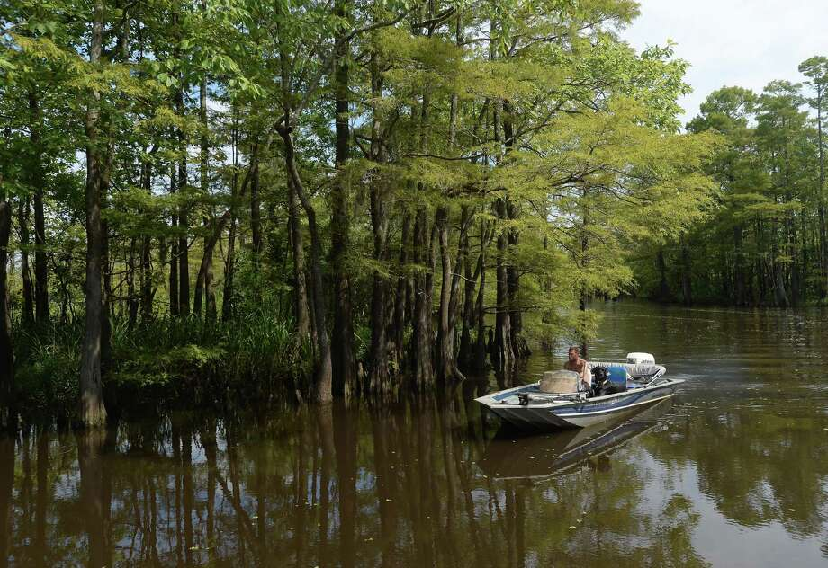 """The river and surrounding lands, including native flora and fauna and the animals that call the region home - including the people who call it home to sport and recreation - are among the highlights of the Saturday Neches River tours aboard the """"Ivory Bill.""""   Photo taken Saturday, August 3, 2019  Kim Brent/The Enterprise Photo: Kim Brent / Kim Brent/The Enterprise / BEN"""