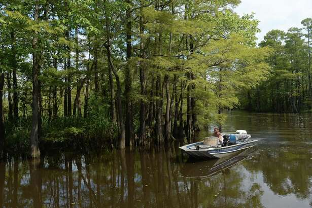 """The river and surrounding lands, including native flora and fauna and the animals that call the region home - including the people who call it home to sport and recreation - are among the highlights of the Saturday Neches River tours aboard the """"Ivory Bill."""" Photo taken Saturday, August 3, 2019 Kim Brent/The Enterprise"""