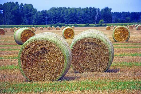 Bales sit ready to be picked up in a field along Campbell Road in Colfax Township outside of Bad Axe, signaling the near conclusion of summer, and welcoming the onset of fall.