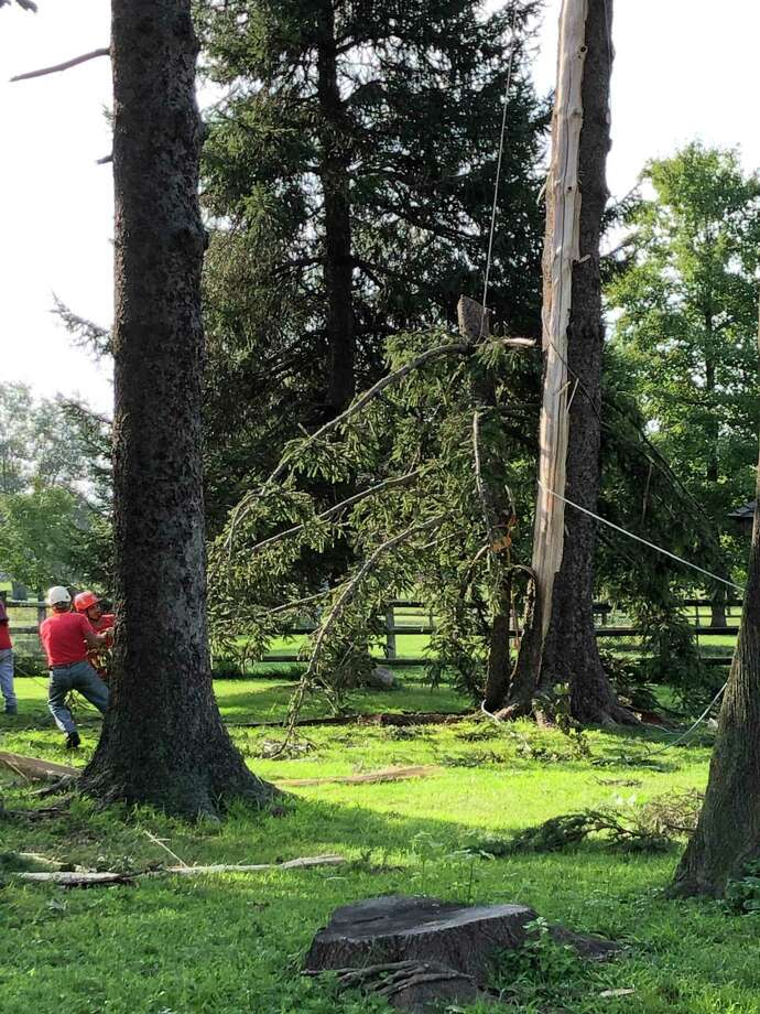 Workers remove a tree from the Spencer's Run Dog Park in Waveny Park in New Canaan Thursday, Aug. 22, 2019, after it was damaged by lightning Tuesday, Aug. 20. Photo: Contributed Photo / New Canaan Animal Control / New Canaan Advertiser Contributed