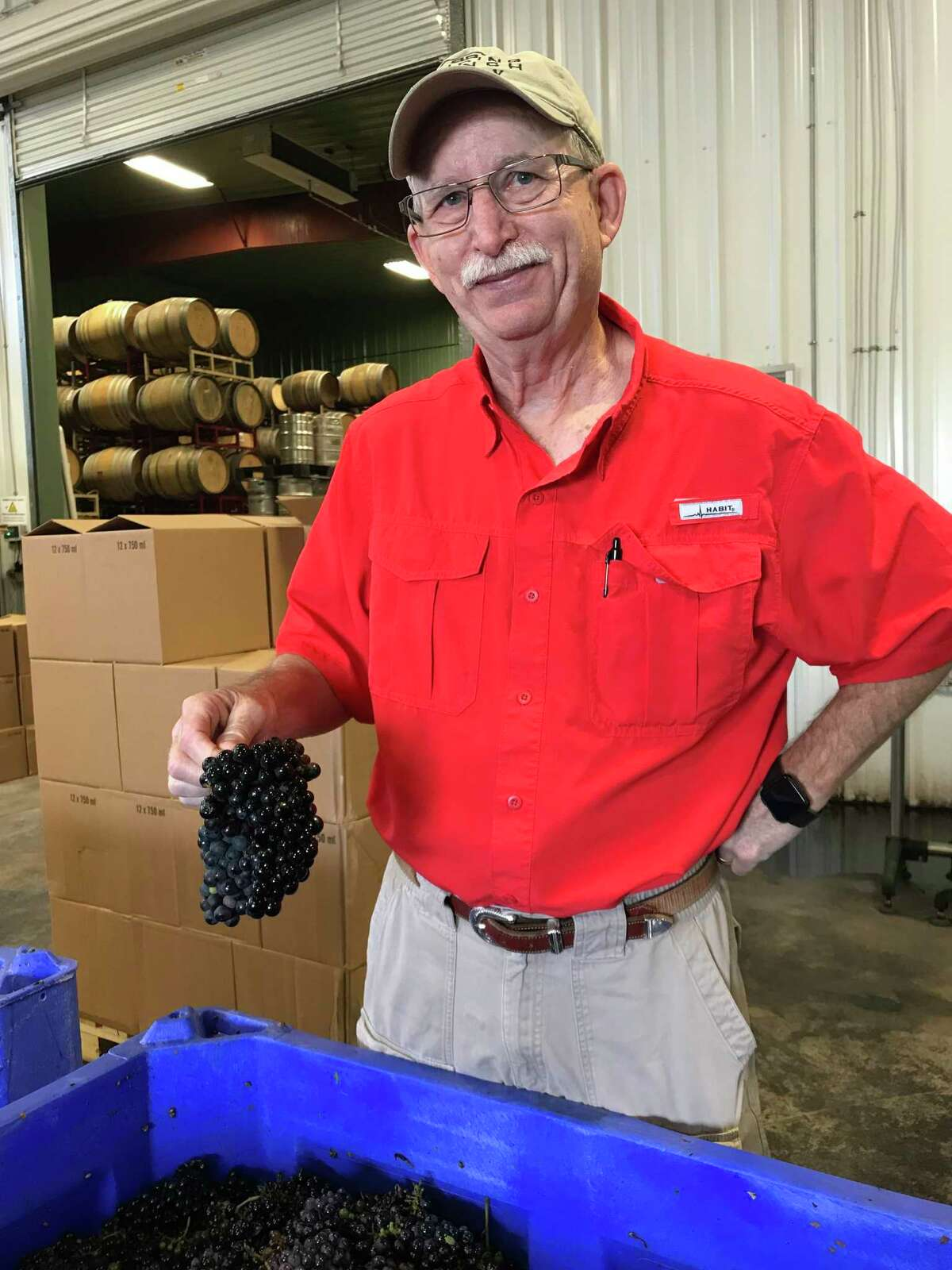 Bob Young with Bending Branch Winery in Comfort, Texas holds Tannat grapes.