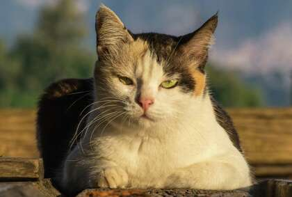 Outdoor Cats Suffering In The Texas Heat Need Extra Help