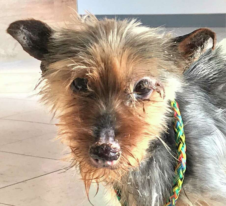 Hamden police are seeking information about a dog found tied to an apartment building on Mix Avenue earlier this month. Photo: Hamden Police Department