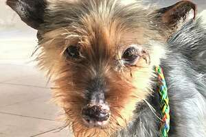 Hamden police are seeking information about a dog found tied to an apartment building on Mix Avenue earlier this month.
