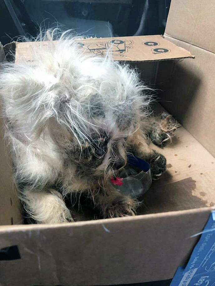 This dog was found in a box, locked in a portable toilet, in New Haven, Conn., on Aug. 22, 2019. Photo: Contributed Photo / Jay Bandy