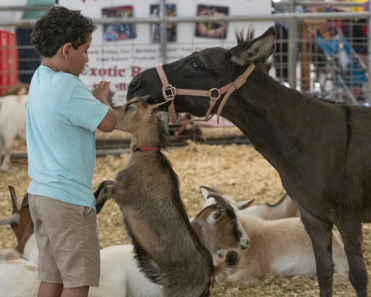 Lucas Daniel Hernandez feeds a goat and a donkey 08/24/19 in the petting zoo at the Midland County Fair. Tim Fischer/Reporter-Telegram