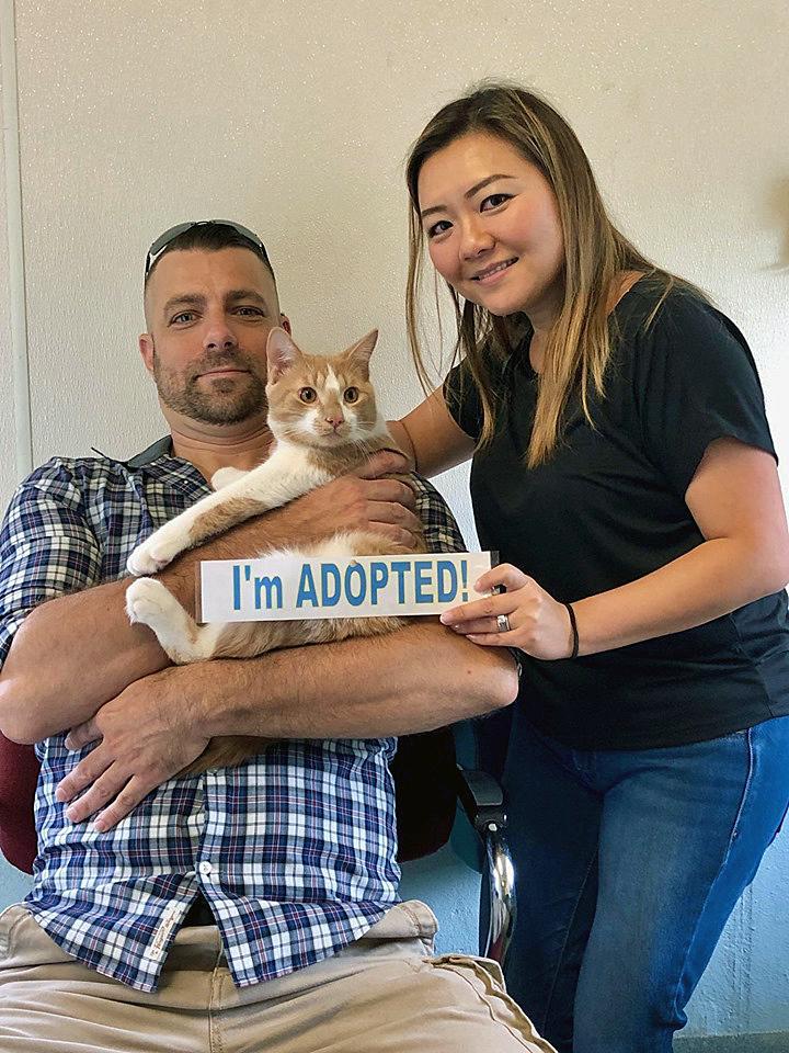 Cat thrown off Bridgeport bridge adopted