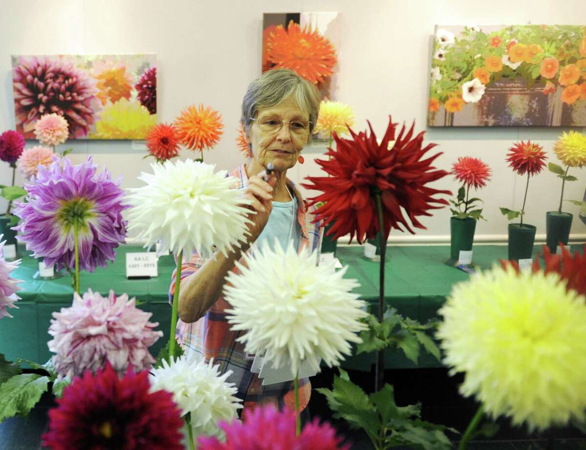 """The Greenwich Botanical Center will celebrate the season with the 2019 Dazzling Dahlia Show from 2 to 4 p.m. Saturday and 10 a.m. to 3 p.m. Sunday at the GBC at 130 Bible St. in Cos Cob. These stunning flowers are called the """"last show"""" because dahlias bloom in late summer and early fall, providing gardens with one last spectacular blast of color. Free and open to the public."""