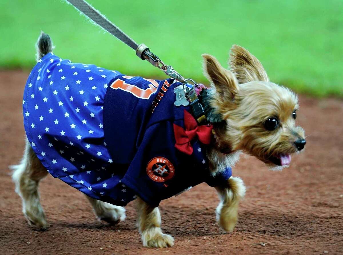 Dogs and their owners parade around the field during the annual Astros Dog Day held before the Houston Astros and Los Angeles MLB Game at Minute Maid Park Sunday, Aug. 25, 2019, in Houston.