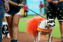 Dogs and their owners parade around the field during the annual Astros Dog Day held before the Houston Astros and Los Angels MLB Game at Minute Maid Park Sunday, Aug. 25, 2019, in Houston.