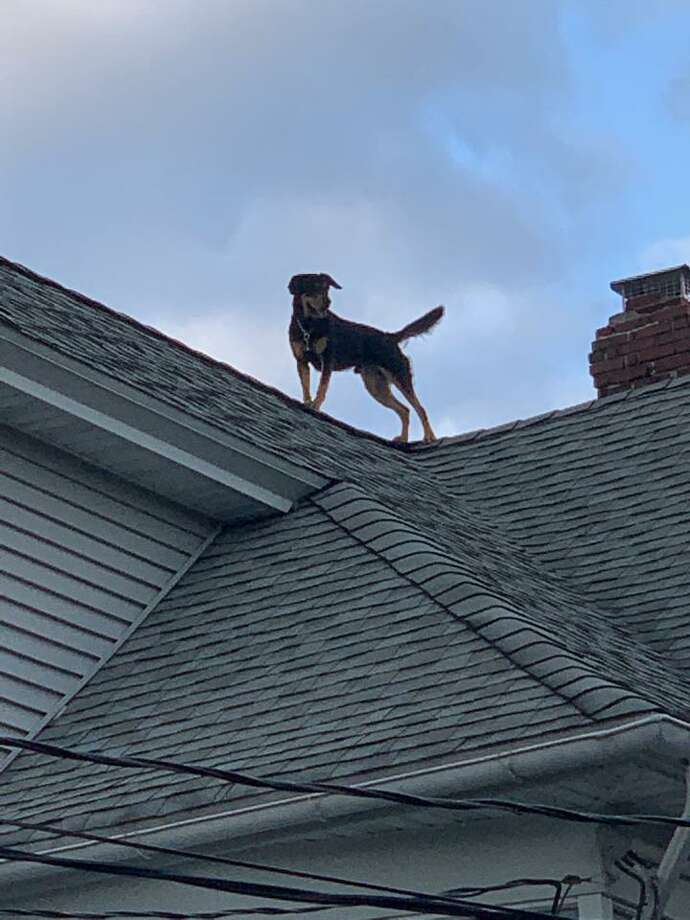 Bridgeport firefighters rescued a dog from a Scofield Avenue house on Aug. 25, 2019. Photo: Bridgeport Fire Department / Contributed