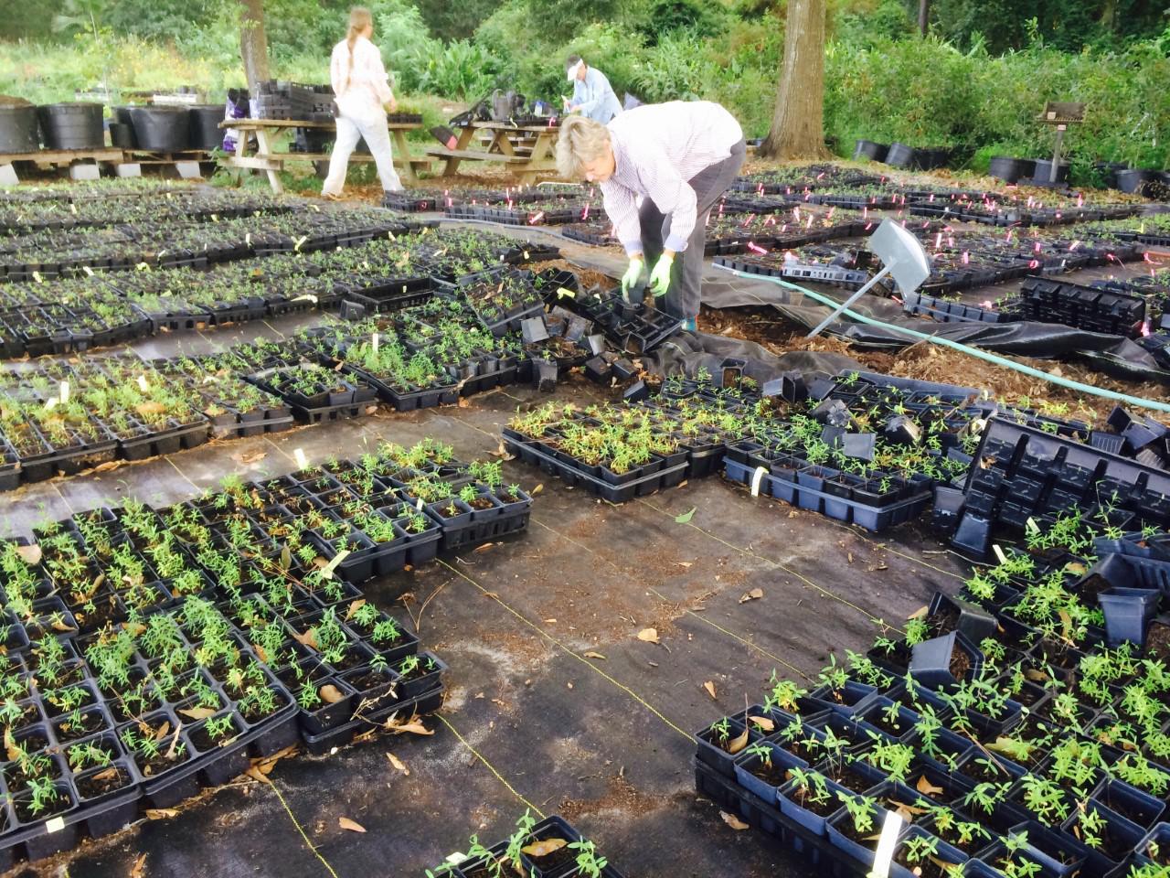 Woodlands hosting annual landscaping, gardening workshop Sept. 28