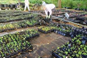 One of the longest running gardening and landscaping expos in the Houston region returns to The Woodlands on Saturday, Sept. 28, as the 22nd annual Woodlands Landscaping Solutions day is hosted from 9 a.m. to noon at The Recreation Center at Rob Fleming Park in the Village of Creekside Park. The event is hosted by The Woodlands Township Environmental Services Department in conjunction with numerous sponsors and other entities, said John Geiger, manager of the township's Environmental Services Department.