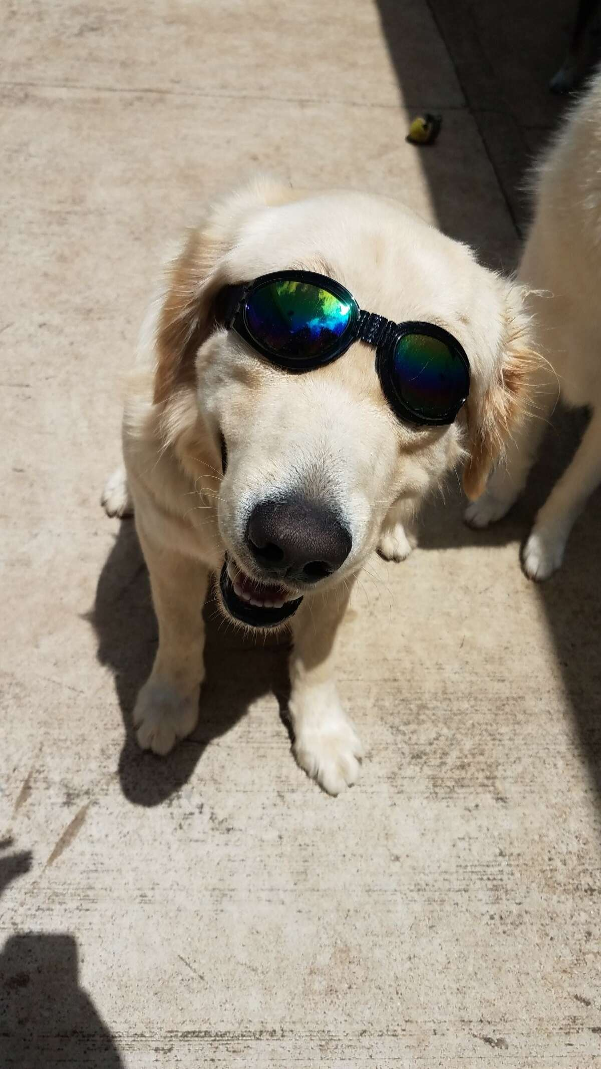 Click through to see some of the reader-submitted photos for International Dog Day>>> Morty is a three-year-old Golden Retriever.