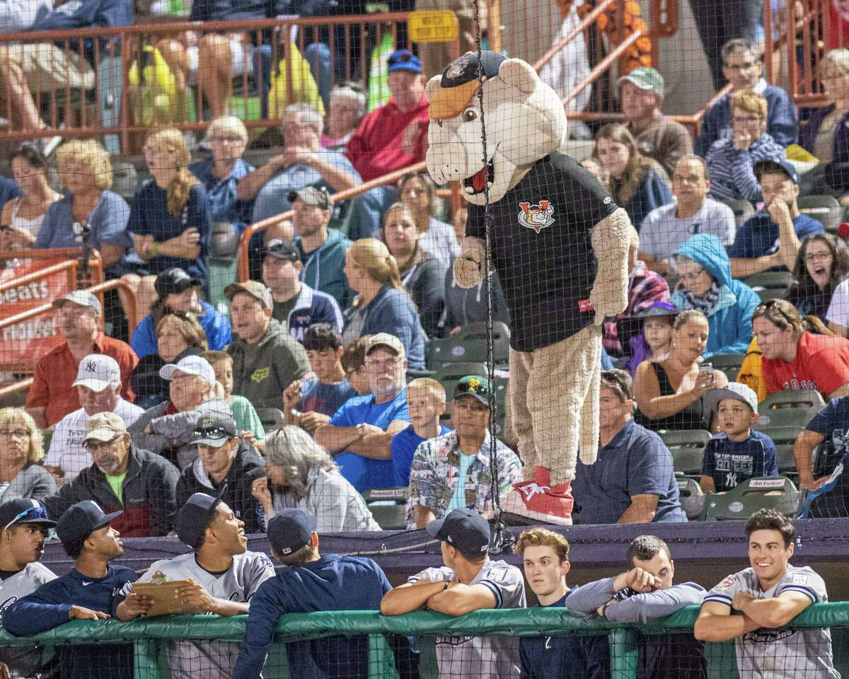 Tri-City ValleyCats mascot Southpaw's, during his Not So Scary Halloween Night, gives the Staten Island Yankees some razing during a game at the Joseph L. Bruno Stadium in Troy NY (Jim Franco/Special to the Times Union.)