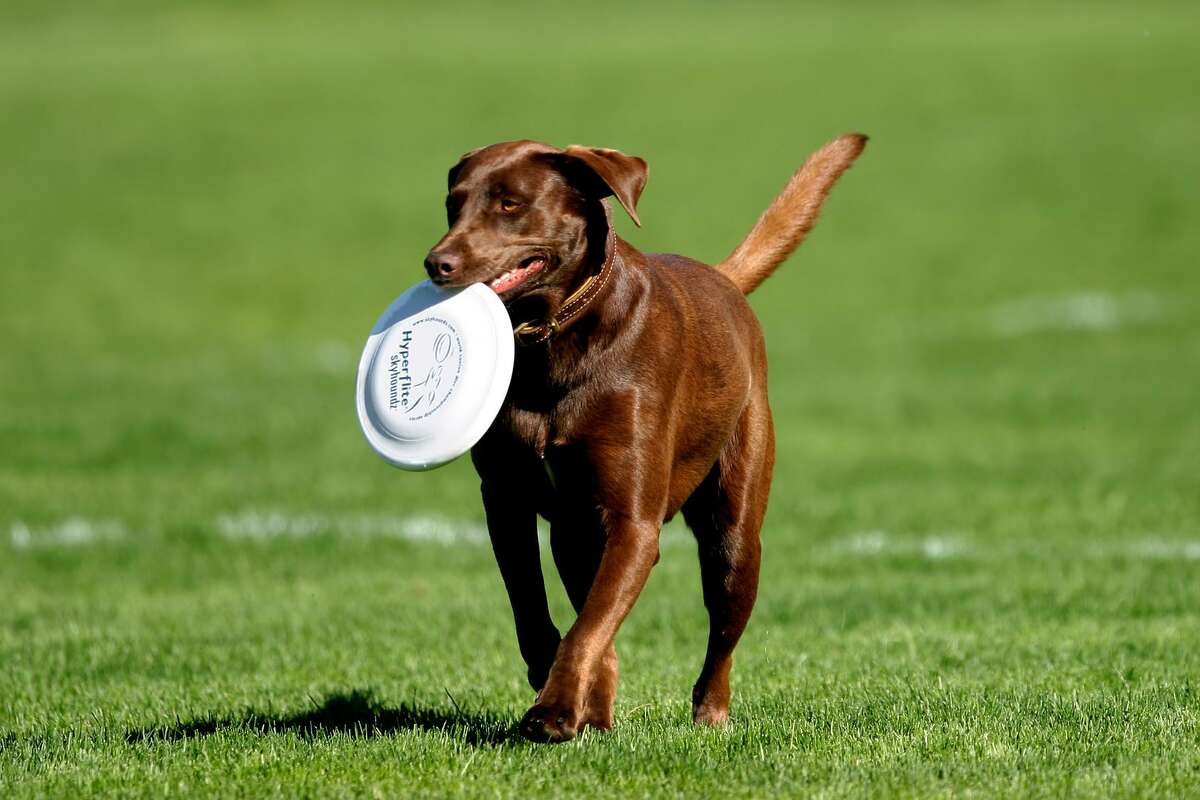 Friendswood dogs will now have their own place in the city. At 5 p.m. Aug. 28, the city will officially open Friendswood PetSafe Dog Park at Old City Park, 300 Briarmeadow Avenue.