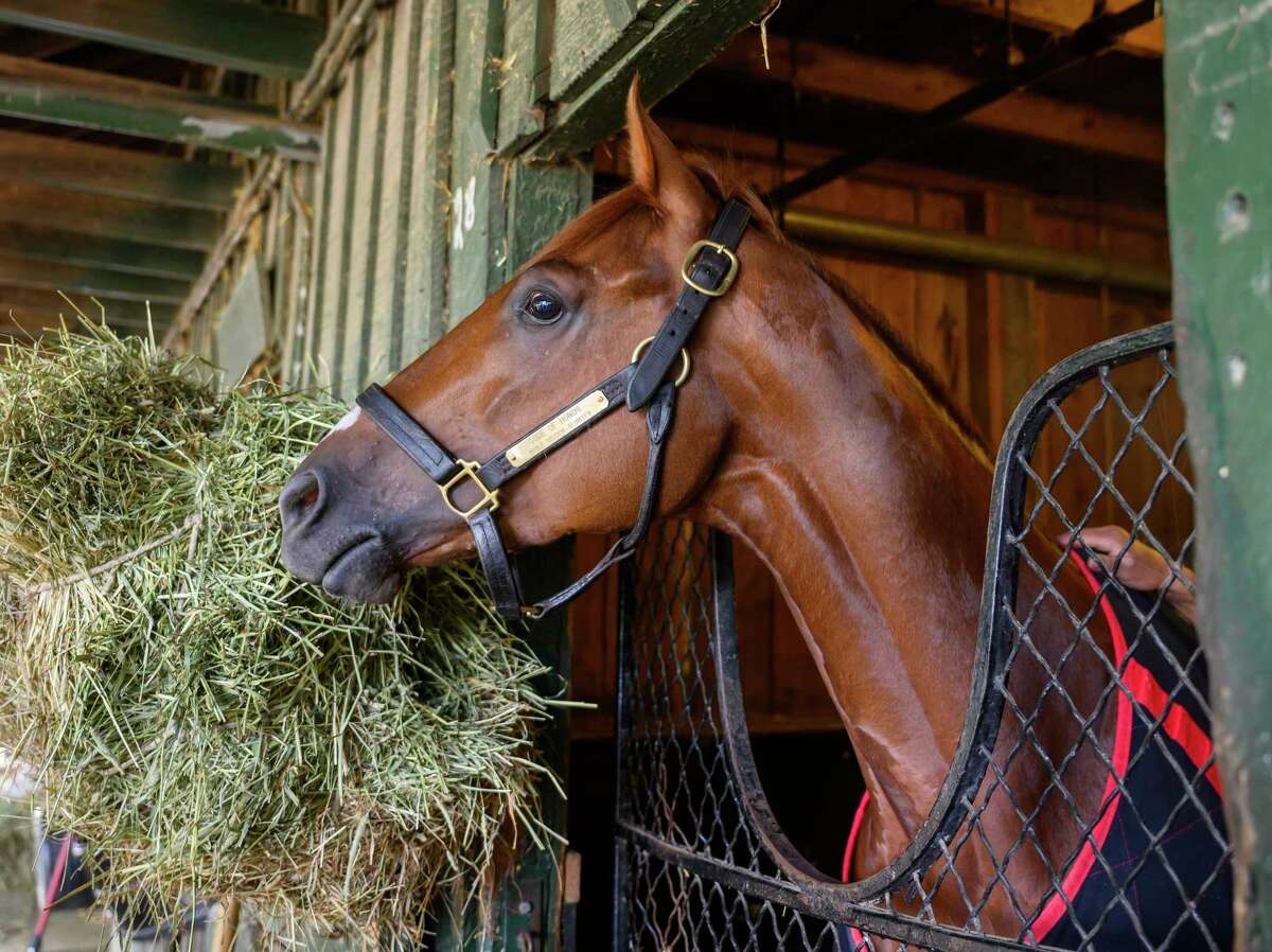 Travers Stakes winner Code of Honor looks out of his stall at his barn on the Oklahoma Training Center this morning Sunday Aug. 25, 2019 in Saratoga Springs, N.Y. Photo by Skip Dickstein