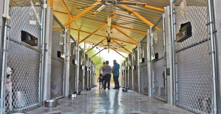 El cabildo aprobó el martes 27 de agosto un programa de esterilización y castración de 50.000 dólares Photo: Danny Zaragoza /Laredo Morning Times / Laredo Morning Times
