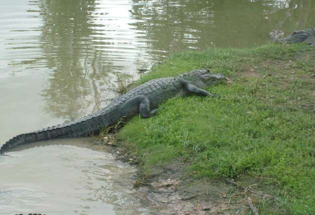 Bathtub Gator to Naked Boating, Its the TX Game Warden