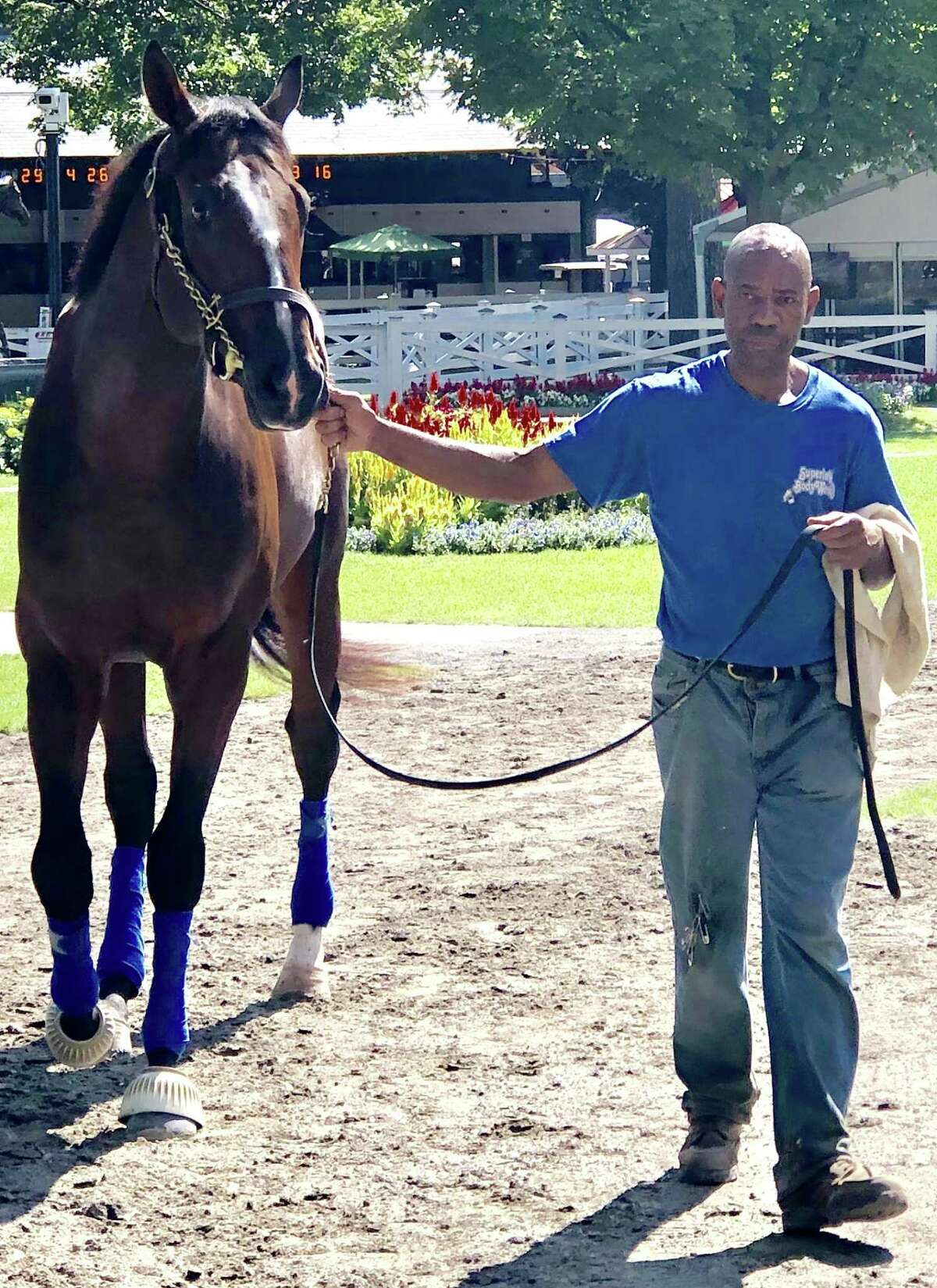 Come see what just might be the future on Monday. The Saratoga Race Course meet ends its 40-day (well, it was only 39 this year because of a day lost to extreme heat) season on Labor Day but not before they run the Grade I, $350,000 Hopeful for 2-year-olds. You just might be seeing a star of next year's Triple Crown series. This is the good-looking Green Light Go, who is unbeaten in two career starts and will look to make it three in the Hopeful. He was schooling in the Saratoga paddock Thursday morning, getting ready for his toughest day yet. Looking like he is ready to go (sorry, could not resist). (Tim Wilkin / Times Union)