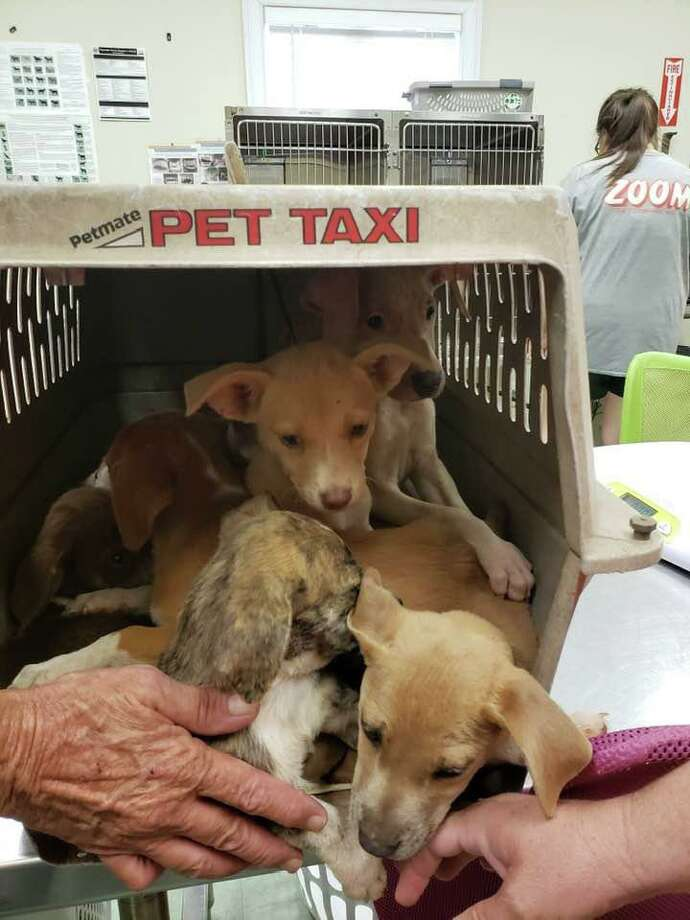 Saybrook Home is hosting a dog adoption event, Sept. 14-15. Photo: Contributed Photo